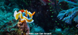 nudi on top by Marc Van Den Broeck 